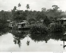 Image of Swampland Dwellings In Costa Rica -