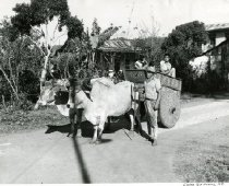 Image of Ox Cart In Costa Rica -