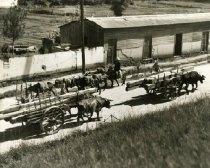 Image of Hauling Timber To Guatemala City