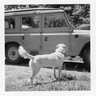 Image of Warren family dog pictured w/ car