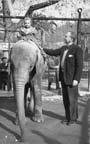 Image of Rosanna riding an elephant, RPW standing beside