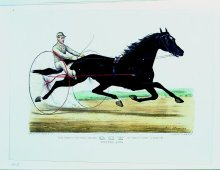 Image of Famous Trotting Gelding Guy by Kentucky Prince, The