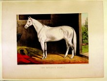 Image of Favorite Horse, The