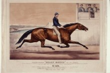 "Image of Pacing Horse ""Billy Boyce"" of St. Louis"
