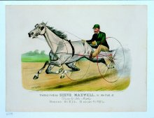 Image of Trotting Gelding Steve Maxwell, by Ole Bull Jr.
