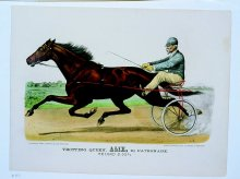 Image of Trotting Queen Alix, by Patronage