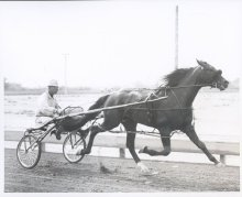 Image of Lew Barasch Roosevelt Raceway Collection - Training
