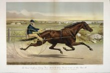 Image of Grand California Trotting Mare Sunol, Record 2:10 1/2 at 3  years old, The