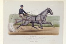 Image of Grey Mare Lucy, the Pacing Queen, The