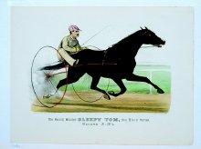 Image of Pacing Wonder Sleepy Tom, the Blind Horse, The