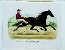 Image of Trotting Gelding Harry Wilkes, by George Wilkes