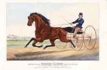 Image of Trotting Stallion Commodore Vanderbilt