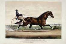 Image of Trotting Stallion George M. Patchen Jr. of California