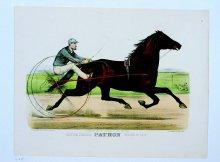 Image of Trotting Stallion Patron