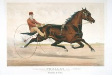 Image of Trotting Stallion Phallas, driven by E.D. Bithers