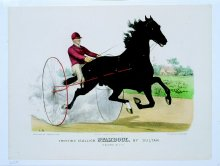 Image of Trotting Stallion Stamboul, by Sultan