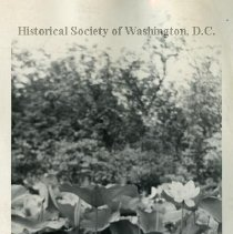 Image of WY 0399.08 - Water lilies, Kenilworth Aquatic Gardens.