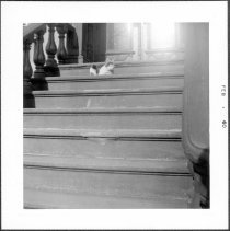 Image of [Cat on steps at 286 President Street.] - John D. Morrell photographs