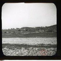 Image of [Cows grazing, Prospect Park] - Adrian Vanderveer Martense collection