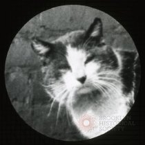 "Image of Cat named ""Puss"" - Ralph Irving Lloyd lantern slides"