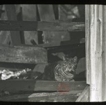Image of Cat on Steps of Tunis Bergen House - Ralph Irving Lloyd lantern slides