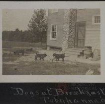 Image of Dogs at breakfast, Tobyhanna 09' - Burton family papers and photographs