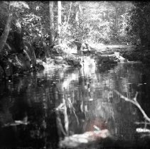 Image of [Man fishing by pool in woods] - William Koch glass plate negatives