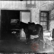 Image of [Dog sitting on a horse] - William Koch glass plate negatives