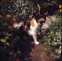 Image of Cat [in flower garden] - Otto Dreschmeyer Brooklyn slides