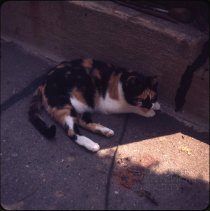 Image of Cat [laying] - Otto Dreschmeyer Brooklyn slides