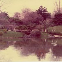 Image of [Brooklyn Photographs: Botanical Garden--Japanese pond] - Donald L. Nowlan Brooklyn collection