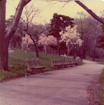 Image of [Brooklyn Photographs: Prospect Park] - Donald L. Nowlan Brooklyn collection