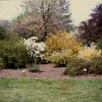 Image of [Flowering bushes] - Donald L. Nowlan Brooklyn collection