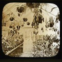 Image of [Greenhouse interior] - Adrian Vanderveer Martense collection