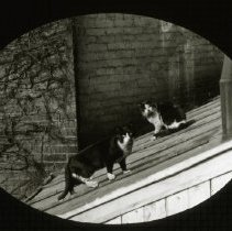 "Image of Cat named ""Well?"" - Ralph Irving Lloyd lantern slides"