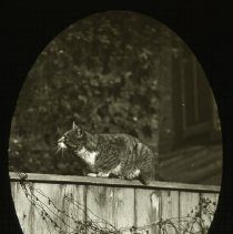 "Image of ""Interested"" - Ralph Irving Lloyd lantern slides"