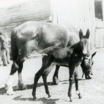 Image of Horses_2