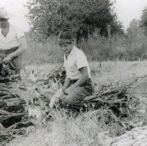 Image of Corn Harvest_2