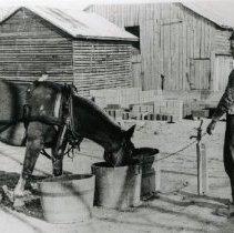 Image of Horses_4