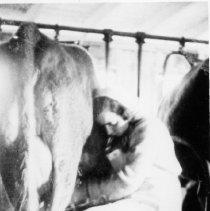 Image of Eva Loew Milking A Cow