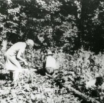 Image of Planting  Crops