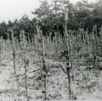 Image of Field