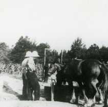 Image of Horses_3