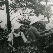 Image of Tobacco Harvesting_1