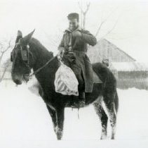 Image of Horses_5