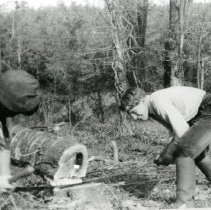 Image of George Landecker Cutting Trees