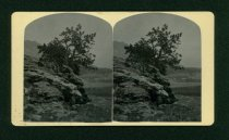 Image of 1985.047.042 - Stereograph