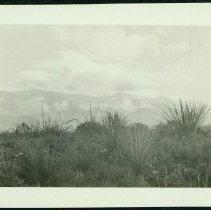 Image of 1998.014.012 - Print, Photographic