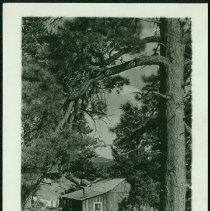 Image of 2004.024.135 - Print, photographic