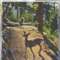 Image of 2007.022.006 - Postcard